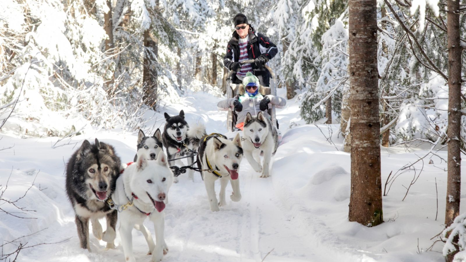 Quebec Dogsledding